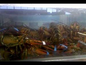 Lobsters in the tank at Grand Mart - YouTube