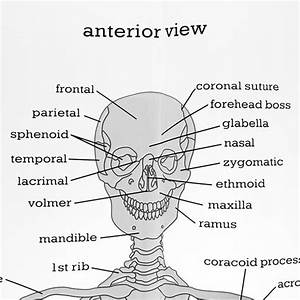 Knee Anatomy Coloring Page Sketch Coloring Page