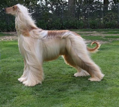 do all dogs shed their fur animals shedding hair 101 3 the jockey your saratoga