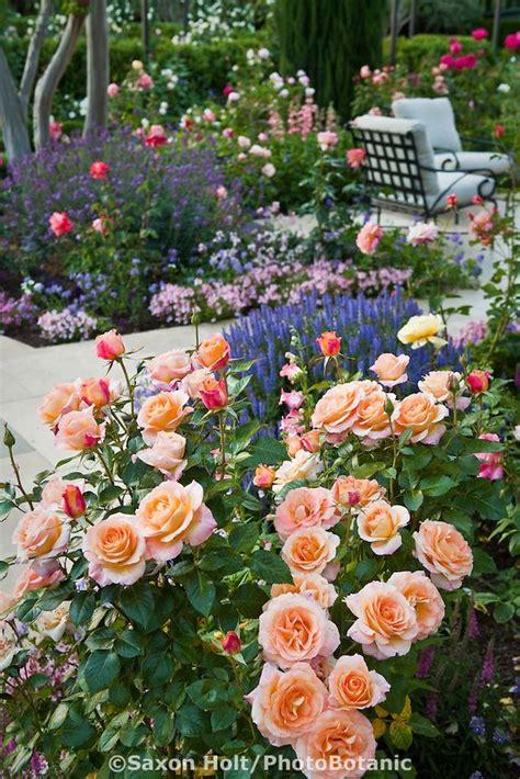 25 b 228 sta floribunda roses id 233 erna p 229 rosor