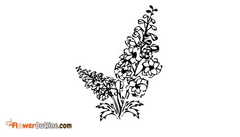 delphinium flower outline images pictures