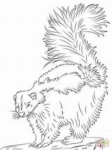 Skunk Coloring Pages Printable Realistic Skunks Animals Drawing Crafts Bible Cartoons Select Nature Many Category Woodland Drawings Colors Popular Categories sketch template