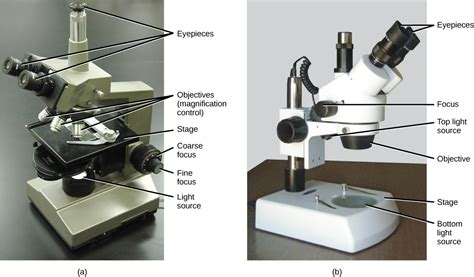 light microscopes can magnify objects up to how cells are studied voer