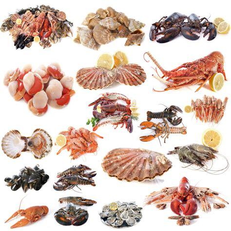 shellfish  good    fish