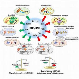 Dual Involvement Of Ros  Rns In Physiology And Disease  Ros  Such As