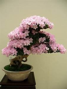 Plante Fleurie Intérieur : savourez la beaut de la plante d int rieur dans notre ~ Premium-room.com Idées de Décoration