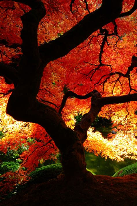 Beautiful Fall Leaves Iphone Wallpaper by Autumn Phone Wallpaper Wallpapersafari