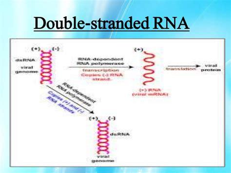 a n mirna ribonucleic acid