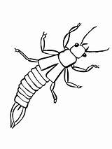 Earwig Insect Coloring Stick Pages Printable Template Walking Silverfish sketch template