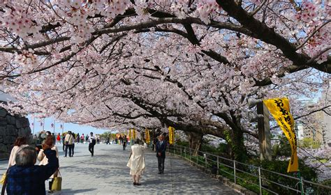 What to Do / Eat in Fukuoka, Japan - Up in the Nusair