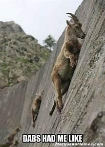 Dabs had me like! - Really High Goat