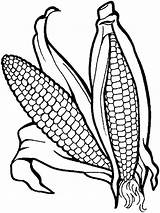 Corn Coloring Vegetables Pages Vegetable Garden Colour Templates Fruits Books Printable Printables Recommended Veggies Kaynak Ie Google Mycoloring sketch template