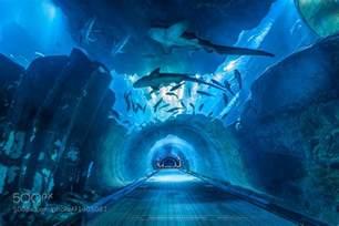 dubai aquarium tunnel by vinz photographies 500px