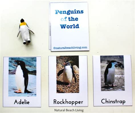 penguin preschool theme the best kindergarten and preschool penguin activities 619