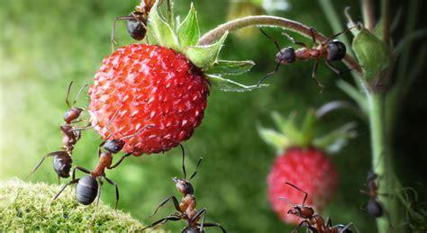 Was Tun Gegen Ameisen?