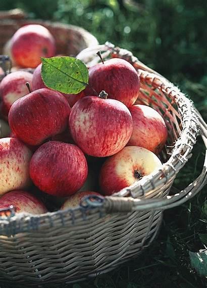 Apple Gifs Goofy Cutesypooh Fruit Delicious Fruits
