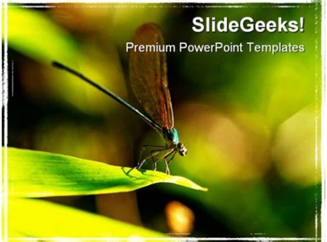insect macro laos animals powerpoint templates