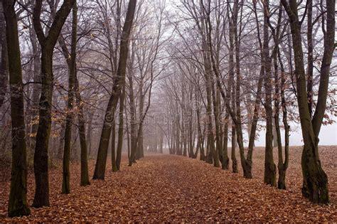 nebel im november november nebel im park stockbild bild gold frisch