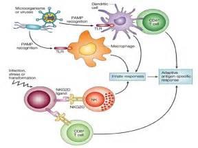 Concept 2- Adaptive (specific) Immunity Immune System/AIDS