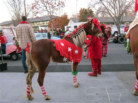 decorating  horse  christmas google search