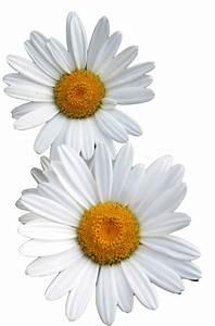 the flower power network