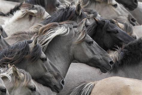 horse vertebrate animals mare mane mammal stallion fauna mustang wallhere hd