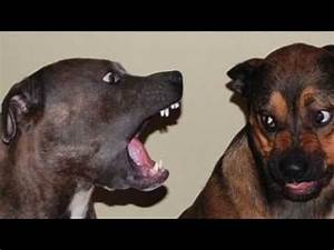 Various Barks And Other Dog Sounds Guaranteed to Make Your ...