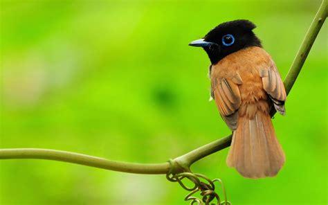 Animals Birds Wallpaper - bird wallpaper 561867