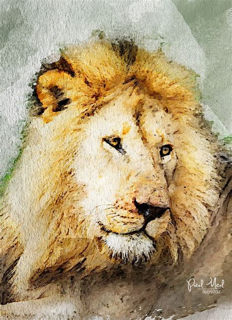 watercolor lion ideas  pinterest lion art