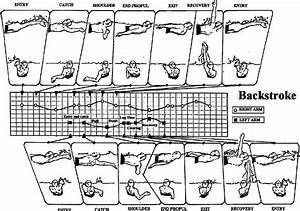 Arm Stroke Phases In Backstroke Of The Left And Right Arms