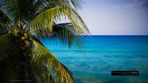 caribbean wallpaper wednesday  reasons