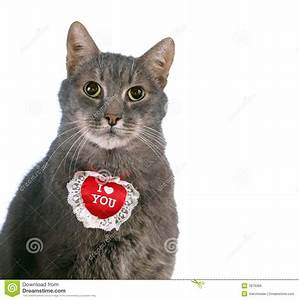 St Valentine's Day cat stock image. Image of winter, nose ...