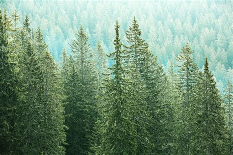 utah christmas tree permits national forests in utah set to sell tree permits deseret news