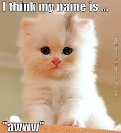 silly cat names cat with a name cat pictures