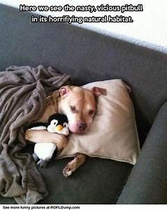 17 Best images about Pitbull Love
