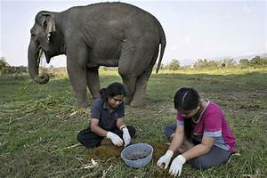 At $50 a cup, you'll never forget your first elephant dung ...