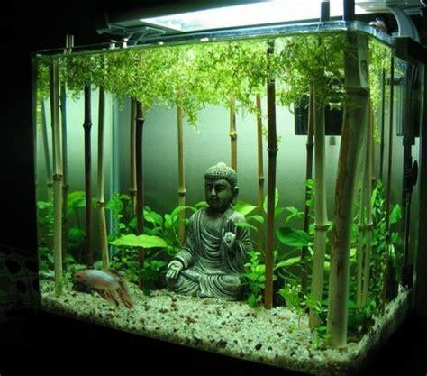 aquarium einrichtung sorgt fuer das wohlfuehlen der