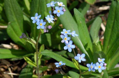 meaning  biennial plants  lists importance