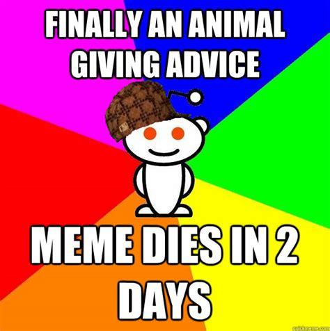 Animal Advice Meme - finally an animal giving advice meme dies in 2 days scumbag redditor quickmeme