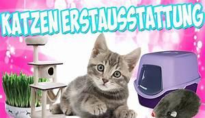 Sisalteppich Für Katzen : katzen erstausstattung die richtige erstausstattung f r die katze bzw kitten youtube ~ Orissabook.com Haus und Dekorationen