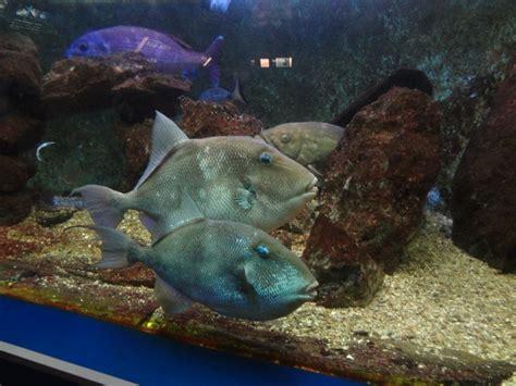 aquarium canet en roussillon aquarium canet en roussillon