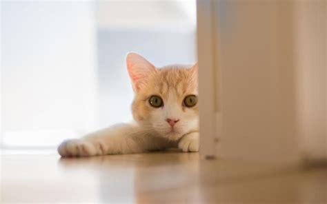 可爱猫咪图片大全