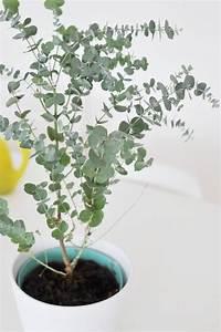 Pflegeleichte Pflanzen Für Die Wohnung : zimmerpflanzen f r dunklen standort ~ Michelbontemps.com Haus und Dekorationen