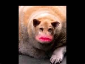 World's Fattest Dog