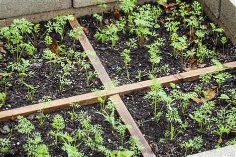 Vegetable Garden Layout Ideas Planning A Vegetable Garden