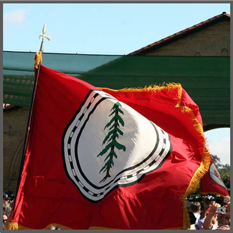 stanford school colors strange mascot the history of the stanford tree