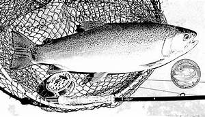 Trout Drawing Black And White   www.imgkid.com - The Image ...
