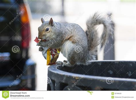squirrel eating peanuts stock photo image 32186520
