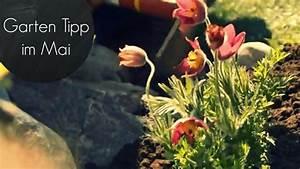 Pflanzen Im Mai : garten tipp im mai gew rze gem se pflanzen rasen ausbessern youtube ~ Buech-reservation.com Haus und Dekorationen
