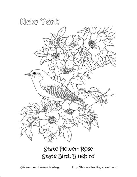 oklahoma state bird  flower   clip